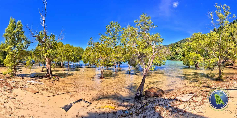 Mangroven am Bai Lan Beach auf Koh Chang