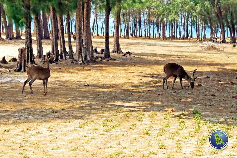 Koh Kradat bei Koh Chang in Thailand