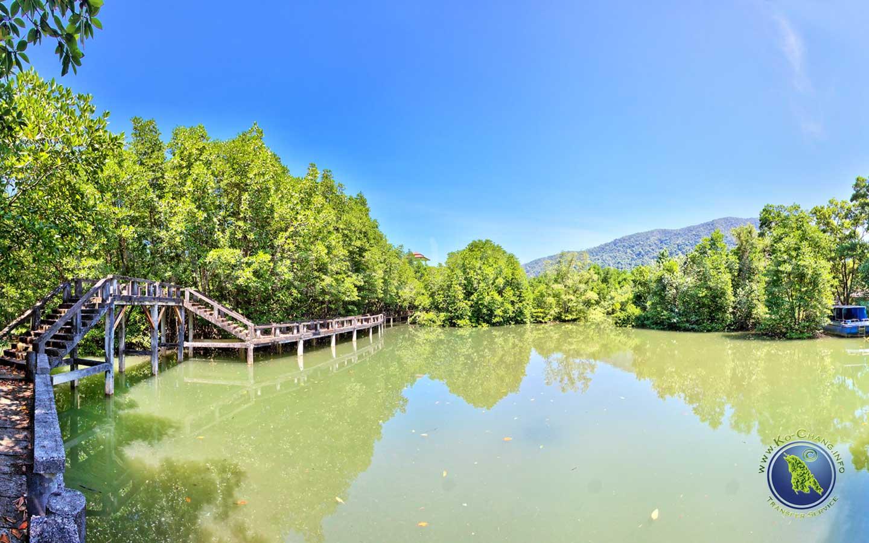 Forêt de mangroves à Salak Khok sur Koh Chang en Thaïlande