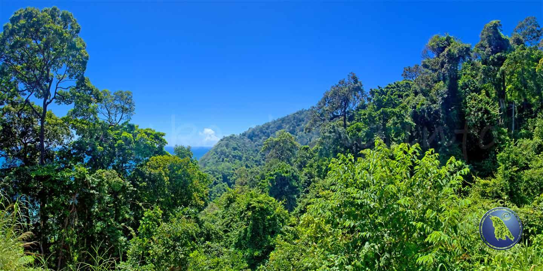 Tropischer Regenwald in Thailand