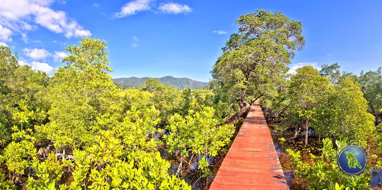 Mangroven-Rundgang Salak Phet Bucht auf Koh Chang in Thailand