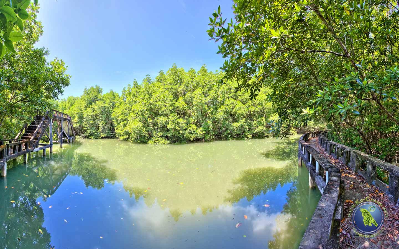 Rundgang durch den Mangrovenwald in der Salak Khok Bucht auf Koh Chang