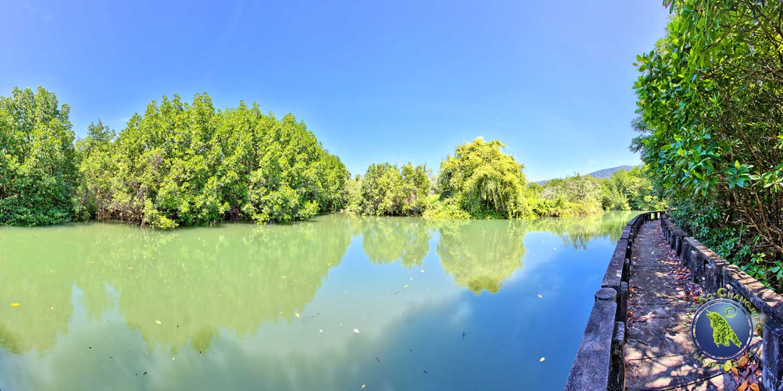 Forêt de mangroves à Salak Khok Bay sur Koh Chang en Thaïlande