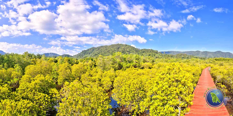 Rundgang durch den Mangrovenwald in der Salak Phet Bucht auf Koh Chang
