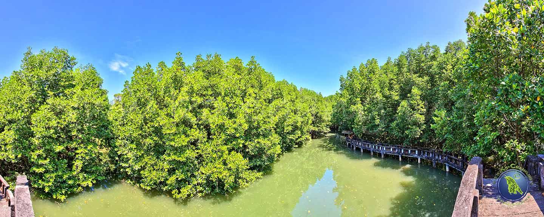 Mangrovenwald in der Salak Phet Bucht auf Koh Chang