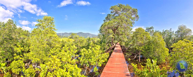 Forêt de mangroves sur Koh Chang