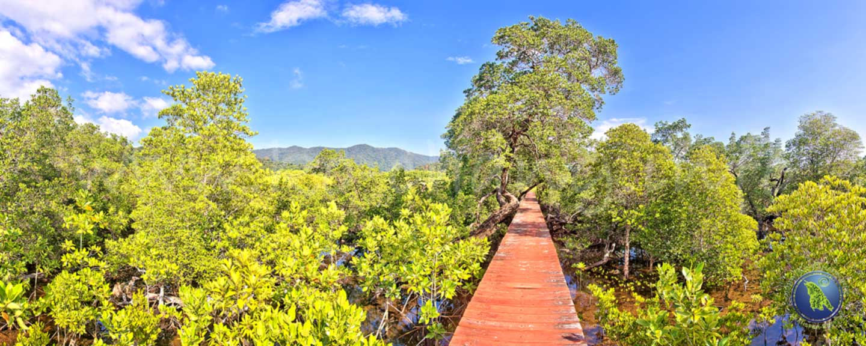Mangroven-Wald auf Koh Chang
