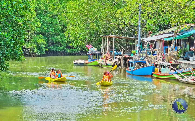 Mangrovenwald in der Salak Khok Bucht auf Koh Chang